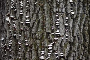 Splotches on the trunk of a tree.