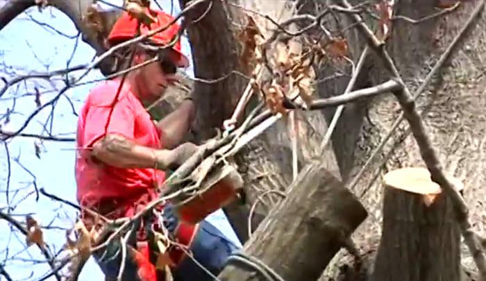 tree care in columbia