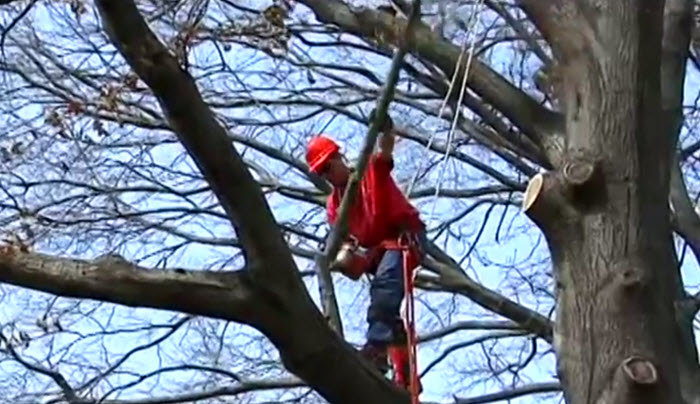 Tree Trimming in Columbia