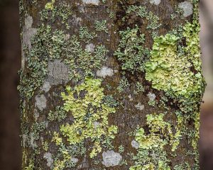 Soft spots on tree.